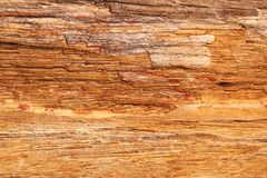 Petrified wood stone texture - background royalty free stock photography