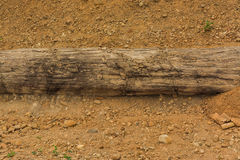 The petrified wood Stock Photography