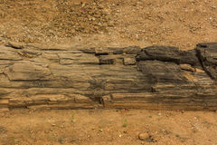 The petrified wood Royalty Free Stock Images