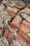 Petrified wood texture. Lesbos, Greece Royalty Free Stock Photo