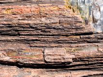 Petrified wood texture Royalty Free Stock Image
