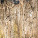 Petrified Wood Texture Background Stock Photography