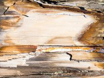 Petrified wood texture background royalty free stock image
