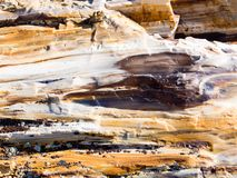 Petrified wood texture background stock image