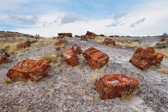 Petrified wood of triassic period Royalty Free Stock Photos