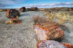 Petrified wood of triassic period Royalty Free Stock Image