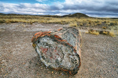 Petrified wood of triassic period in Petrified Forest Royalty Free Stock Image