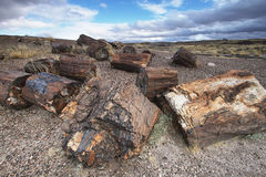 Petrified wood of triassic period in Petrified Forest Stock Photo