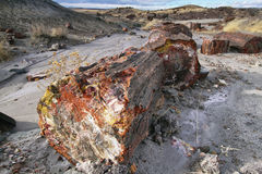 Petrified wood of triassic period in Petrified Forest Stock Photography