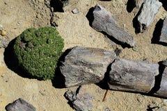 Petrified woods, La Leona desert Stock Photo
