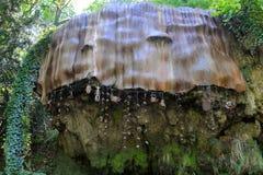 Petrifying стена в Knaresborough, Yorkshire, Великобритания Стоковое Изображение