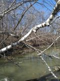 Petrifying spring River in Kenosha Wisconsin. Petrifying spring s river kenosha wisconsin stock photography