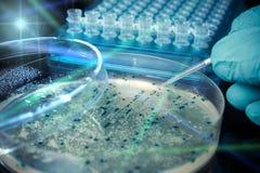Petrischaal met bacteriële kolonies stock foto