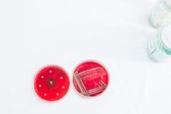 Petrischalen mit wachsenden Bakterien Stockfotografie