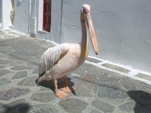 Petro или Питер пеликан, известный пеликан городка Mykonos, острова Mykonos Стоковые Фото