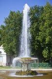 Petrodvorets Ciotola della fontana Fotografie Stock Libere da Diritti