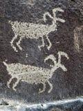 Petroglif w Wschodnim Waszyngton - Dwa cakla Zdjęcia Royalty Free