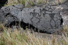 Petroglifi di Hawaian Fotografia Stock Libera da Diritti