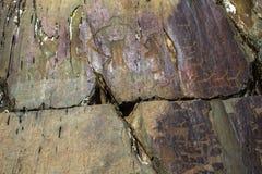 Petroglifi Pitture antiche della roccia nelle montagne di Altai Immagine Stock Libera da Diritti