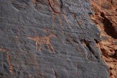 Petroglifos animales en la piedra arenisca roja Imagen de archivo