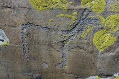 Petroglyph Altai Fotografia de Stock