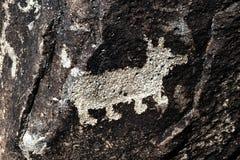 Petroglyph av en hund Fotografering för Bildbyråer