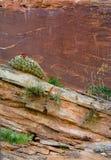 Petroglyph Cactus Flower royalty free stock image