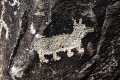 Petroglyph of a Dog Stock Image