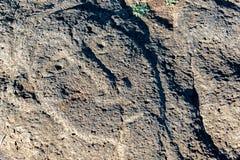Petroglyph för påskö Royaltyfri Foto