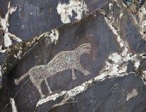 Petroglyph i Sarmishsay, Uzbekistan Arkivfoto