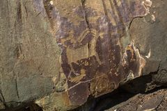 Petroglyphs. Ancient rock paintings in the Altai Mountains, Russia. Royalty Free Stock Images