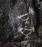 Petroglyphs of Chickens Royalty Free Stock Images