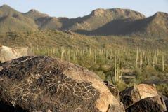 Petroglyphs e cacto Imagens de Stock