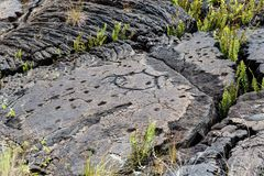 Petroglyphs in lava rock at Pu`uloa along Chain of Craters road, in volcano National Park on the island of Hawaii. Carvings are 40. Petroglyphs at Pu`uloa Long royalty free stock image