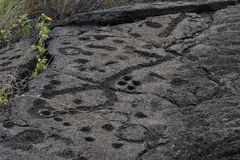 Petroglyphs in lava rock at Pu`uloa along Chain of Craters road, in volcano National Park on the island of Hawaii. Carvings are 40. Petroglyphs at Pu`uloa Long stock images