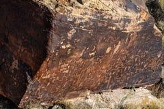 Petroglyphs på tidningen vaggar, förstenades skogen, Arizona Royaltyfria Foton