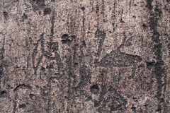 Petroglyphs Zalavruga. Κύκνος Στοκ εικόνα με δικαίωμα ελεύθερης χρήσης