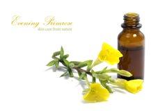 Petrolio dell'enagra, fiori e una bottiglia, isolata su bianco Fotografie Stock