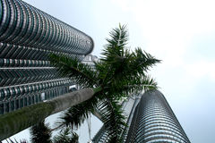 Petronas twin tower, kualalumpur. A palm tree in between petronas towers Stock Photos
