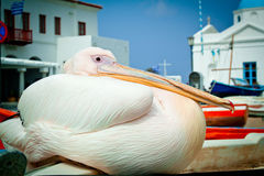 Petros the pelican, Mykonos Royalty Free Stock Photography