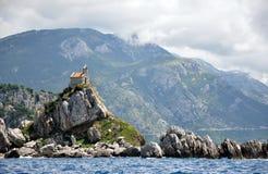 Petrovac und die Kirche auf der Insel Stockbild