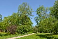 Petrovsky parkerar i vår Skapat i 1827 Sammanlagt område 20 hektar moscow Royaltyfri Bild