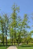 Petrovskypark Gecreeerd in 1827 Totale oppervlakte 20 hectaren Moskou, stock afbeeldingen