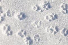 Pets следы ноги на снеге Стоковые Фотографии RF