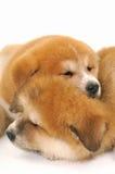 Pets Stock Photos