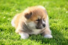 Pets Royalty Free Stock Photo
