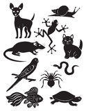 Pets. The figure shows the silhouettes of animals Stock Images