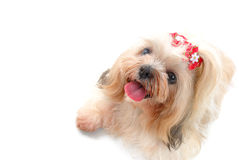 Pets Royalty Free Stock Photography