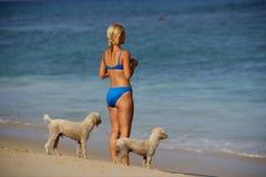 Pets Royalty Free Stock Image