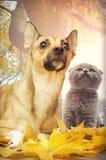pets Imagens de Stock Royalty Free